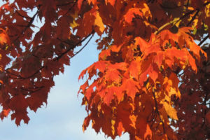 Cover photo for Forest Landowner Tips for Fall