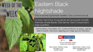 Eastern Black Nightshade