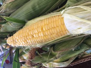 Sweet Corn at Farmers Market