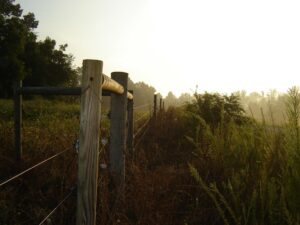 Cover photo for Fence Law: When North Carolina Was the Open Range